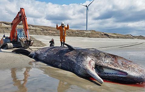 クジラ引き上げ